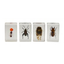 3D Bug Specimen Kit Nr.3