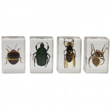 3D Bug Specimen Kit Nr.2
