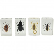 3D Bug Specimen Kit Nr.1
